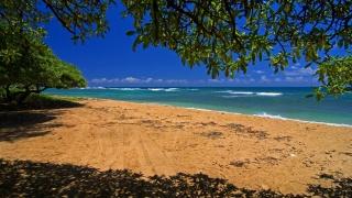 the beach, trees, sea