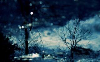 лес, снег, зима, деревя