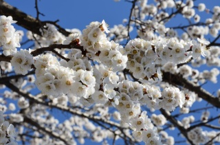 jaro, kvetoucí