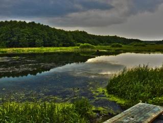 nature, the lake, summer