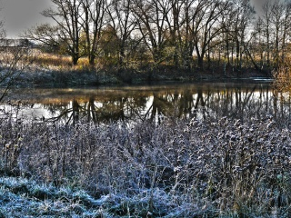freezing, autumn, the pond, nature