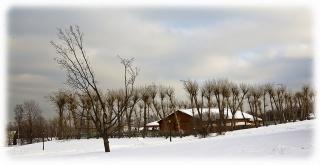 nature, winter, cold, the barn