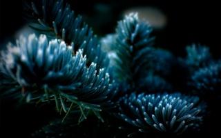 vánoční strom, jehly