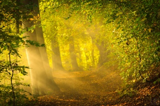 forest, early autumn, morning, nature, the sun, rays