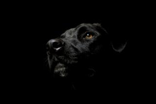 Hlava psa, oko, tmavé pozadí .