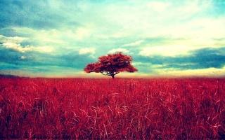 příroda, krajina, krajina, tráva, příroda, nebe, strom, mraky