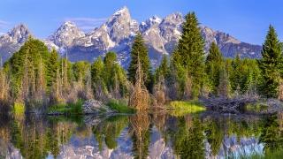 hory, stromy, tráva, jezero, odraz, klid .