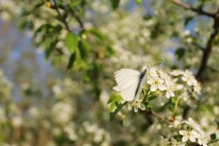 весна, бабочка, цветы