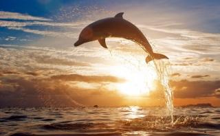тварини, дельфіни, море, захід, бризки, стрибок