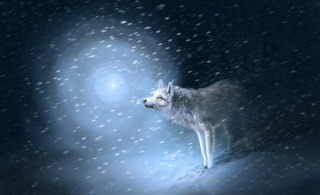 snow, Blizzard, traces, wolf, light