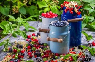 food, fruit, berries, currant, gooseberry, blueberries, raspberry, BlackBerry, cans, vitamins