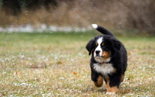 собака, поле, сніг