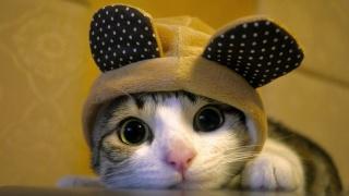 котик, вушка