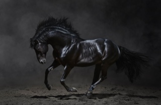 кінь, чорна, фон, темний, красиві .