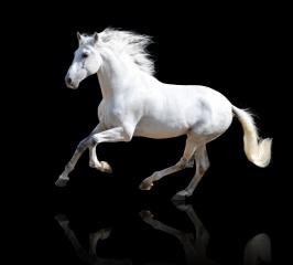 кінь, Біла, фон, чорний, відображення .