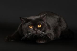 кіт, чорний, фон, очі, світяться .