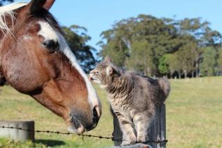 кішка, кінь, дружба, позитив