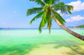 sea, weeping, coconut palm, nature, landscape, sky, clouds, Palma, resort, the ocean