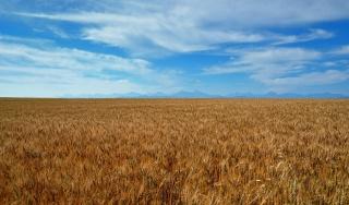 wheat, the sky, mountains, photoshop, Ukraine, nature, summer