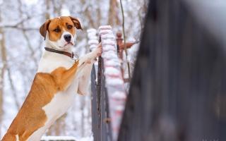 plot, pes, pohled