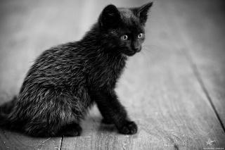 kotě, černá, sedí, pohled