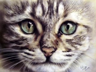 malování, kočka, čenich, pohled, vousy, Zvíře