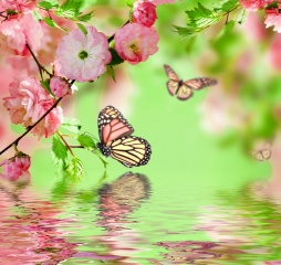 photoshop, spring, butterfly, green background, flowers, water, branches, Sakura