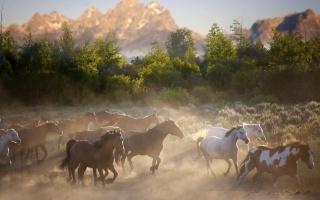 коні, біжать