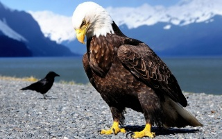 birds, stones, eagle, mountains