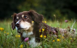 příroda, pes, přítel
