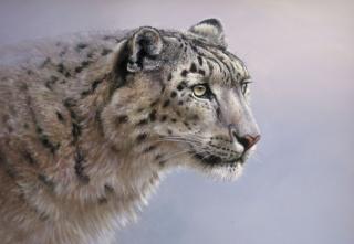 картина, арт, Снежный барс, ірбіс, кішка, дика, хижак, погляд, фон