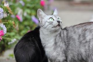 кішка, погляд