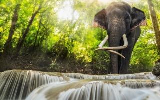 природа, річка, струмок, каскади, вода, фотошоп, слон, Індія, джунглі, ліс, промені, дерева