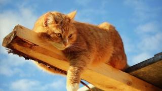 kočka, zázvor, čenich, vousy, uši, oči, strom, krásně, docela v pohodě, zábava