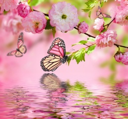 весна, фотошоп, бабочки, вода, ветки, сакура, цветы, розовый фон