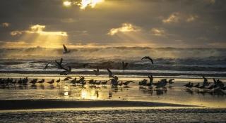moře, paprsky, pláž, racek, ptáci, nebe, břeh, světlo, vlny