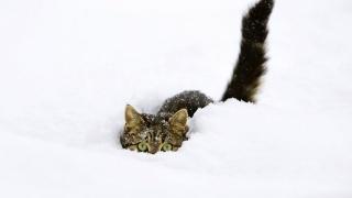 kočka, oči, uši, ocas, sníh, zima, krásně, docela v pohodě, zábava
