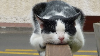 kočka, čenich, spánek, docela v pohodě, uši, krásně, zábava, nos, vousy, uši