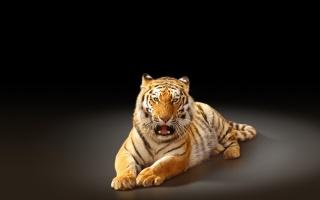 lev, zvířata