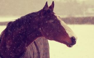 kůň, zvířata, zima, sníh, tapety, pozadí, čenich, kůň