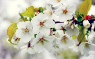 весна, цветение, ветка, дерево, яблоня