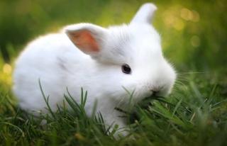 králík, bílá, dítěte, trávník, zelené pozadí, makro