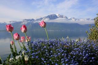 Швейцария, горы, озеро, тюльпаны, цветы, облака, небо, весна, фотошоп