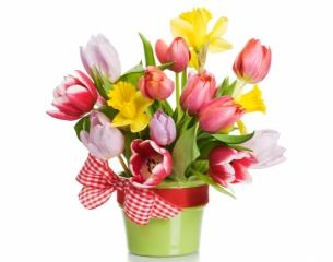тюльпаны, букет, белый фон, весна, лента, бантик