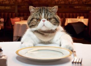 тварини, КОТИ, ресторан, прилади, вилка, етикет, тарілка, стіл, кіт