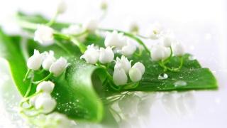 ландышы, květiny, bílá