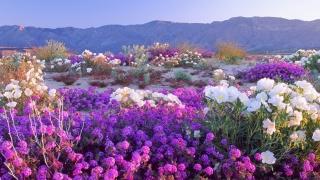 příroda, květiny, jaro, hory, nebe