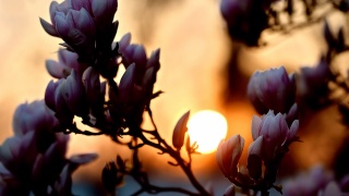 закат, солнце, цветы
