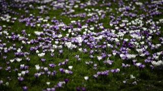 paseka, jaro, květiny