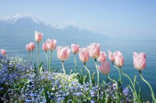 тюльпаны, весна, цветы, горы, озеро, небо